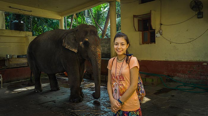 Слониха в Удупи